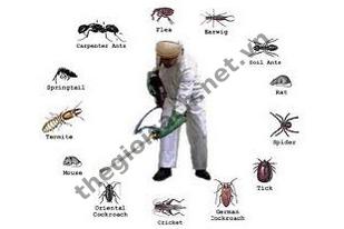 Dịch vụ diệt côn trùng - Thế Giới Sạch