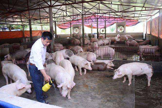 che pham sinh hoc khu mui chuong trai 1 1 - Chế phẩm sinh học khử mùi chuồng trại đem lại lợi ích gì cho chăn nuôi?